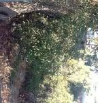 Isla Vista Backyard Before